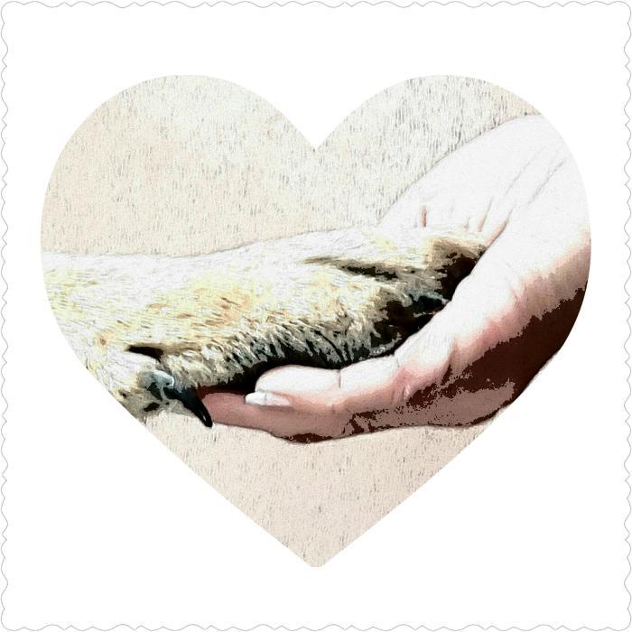 Bild zu mobile Tierheilpraktikerin & Hundetrainerin Nicole Guderjahn-Döring in Ried bei Mering in Schwaben