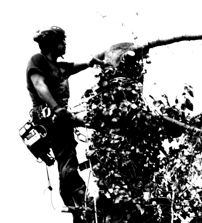 Bild zu Tree-Passion in Gladbeck