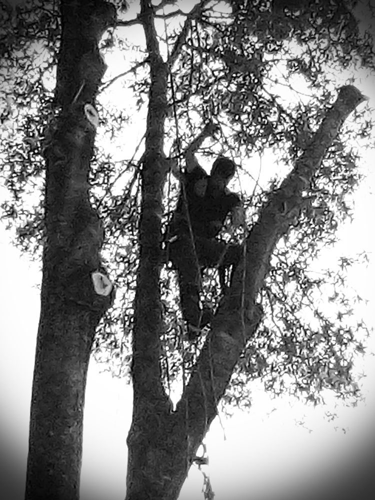 Marcelo Ramos Tree Trimming Service