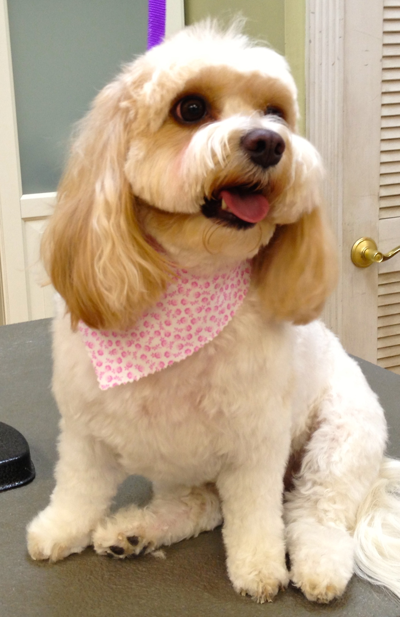 Image 6 | Wags & Whiskers Grooming Spa
