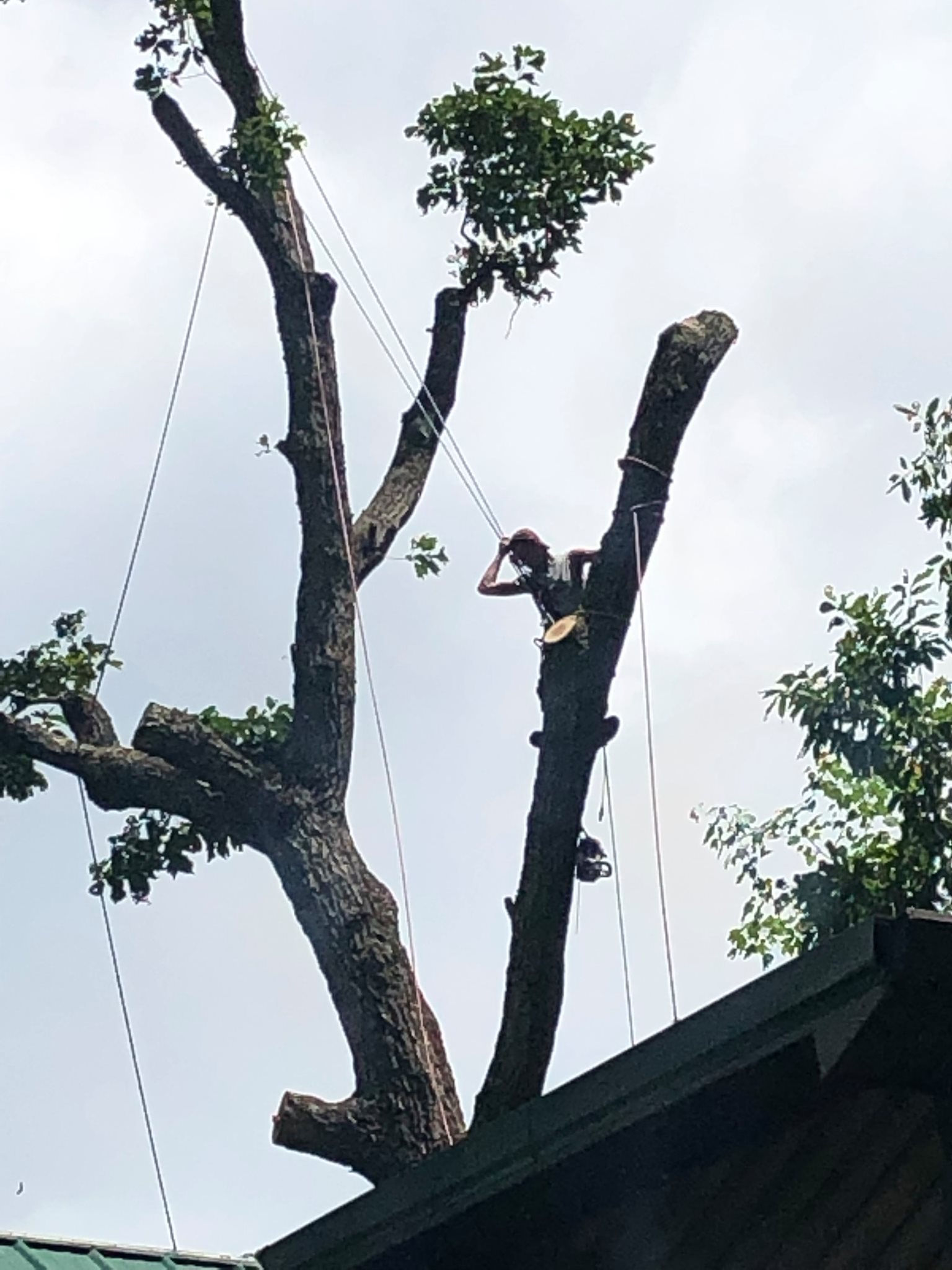 L & M Tree Service