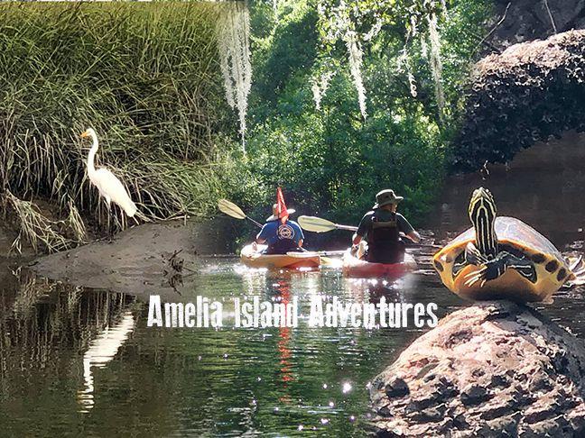 Amelia Island Adventures