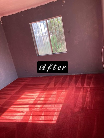 CARPET CLEANING EDWIN