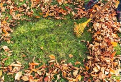 Bilodeau Lawn Care