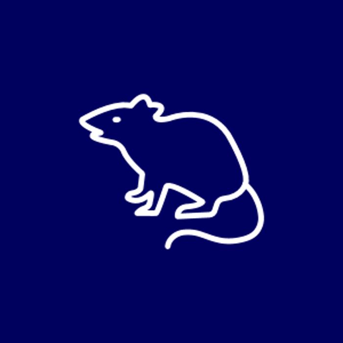 Bild zu Kammerjäger Notruf Oberhausen Wespen Ratten Ungeziefer Experte in Oberhausen im Rheinland