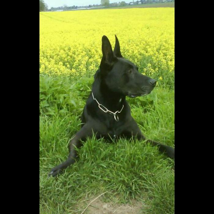 Bild zu Hundeschule Buddy in Köln