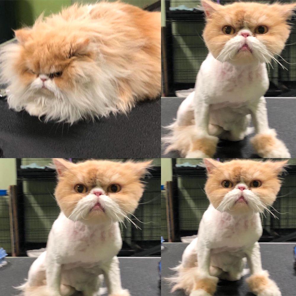 Joann's Pet City Grooming