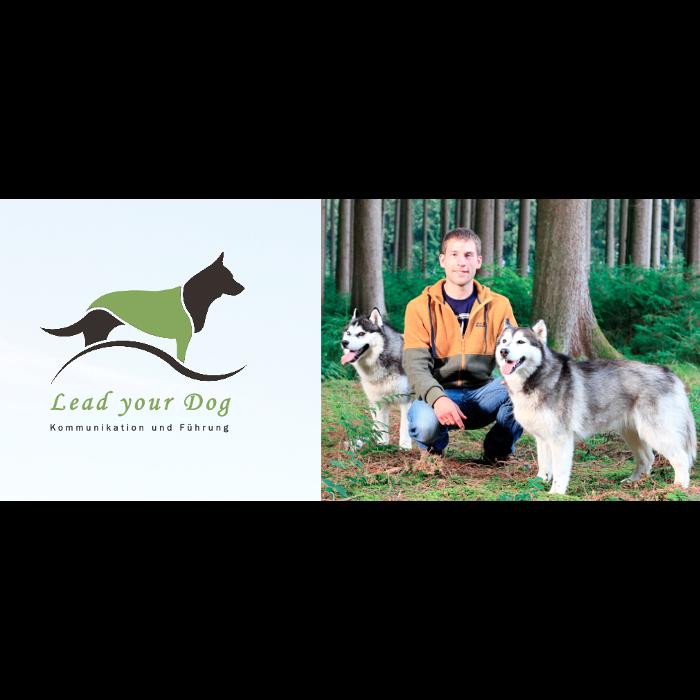 Bild zu Lead-your-Dog Hundeschule / Hundehotel-Pension in Zillenberg Gemeinde Ried