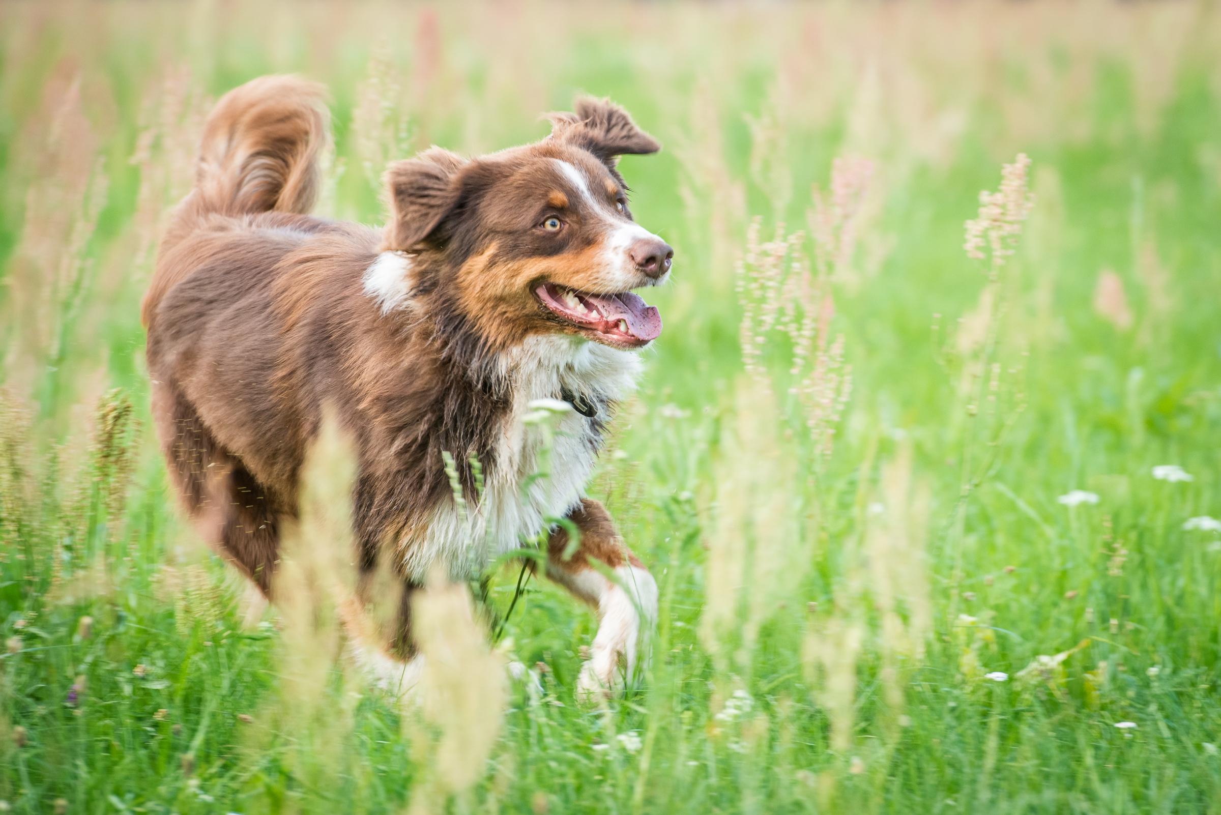 Wolfis-Dog-Team