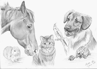 Tierheilpraktikerin, heilende Natur, Karin Paulus