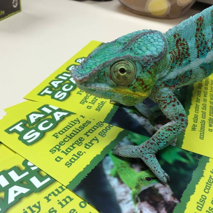 Tails and Scales Pet Centre