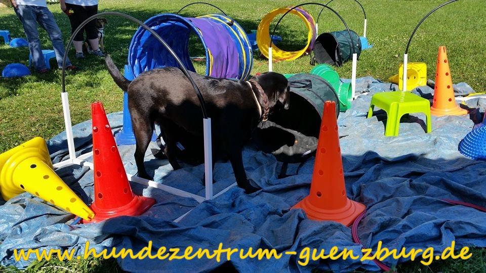 Hundezentrum Günzburg