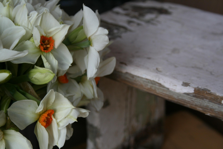 Gather & Bloom