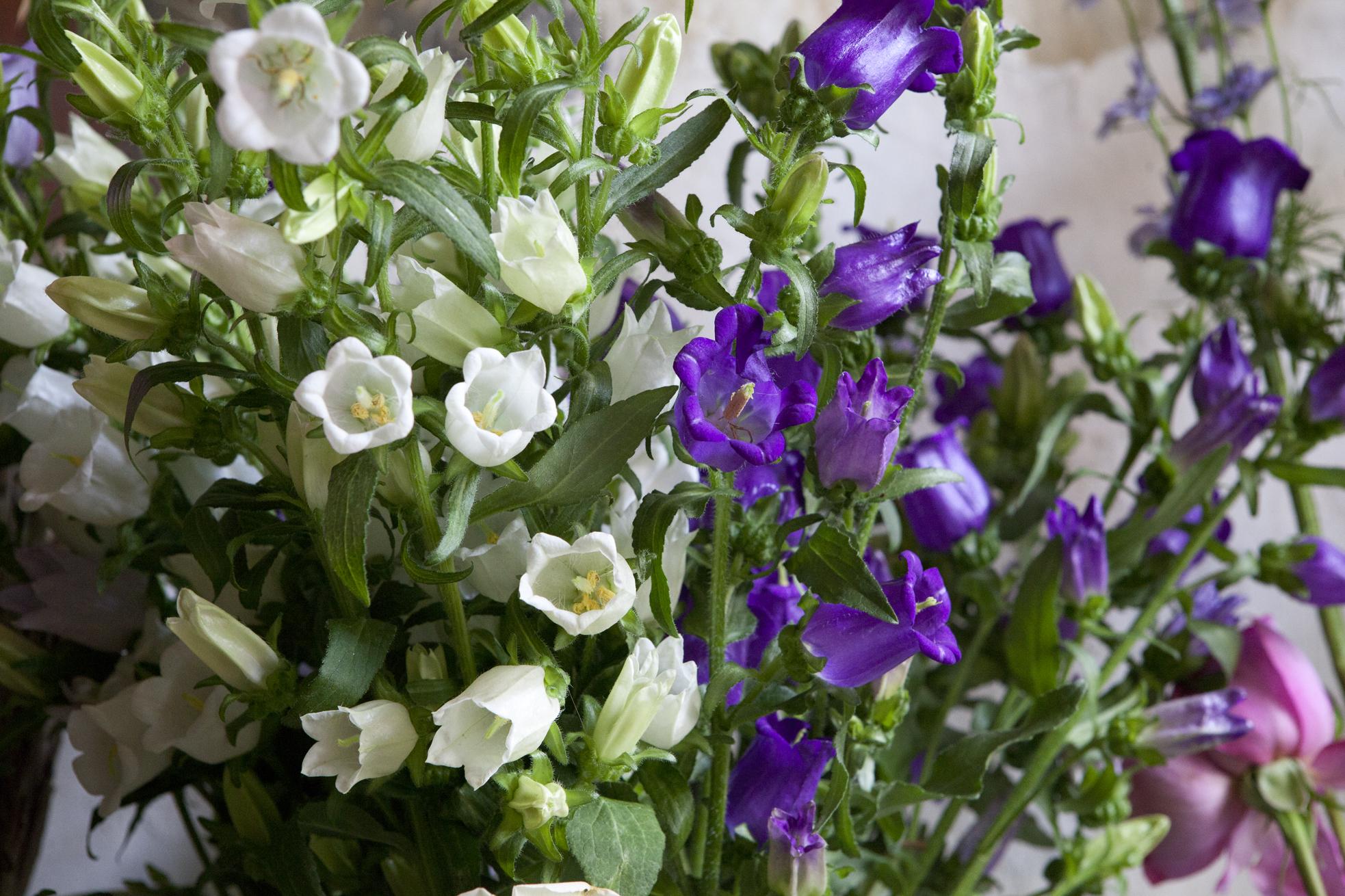 Fleurs et plantes paris infobel france for Plante 1 euro paris