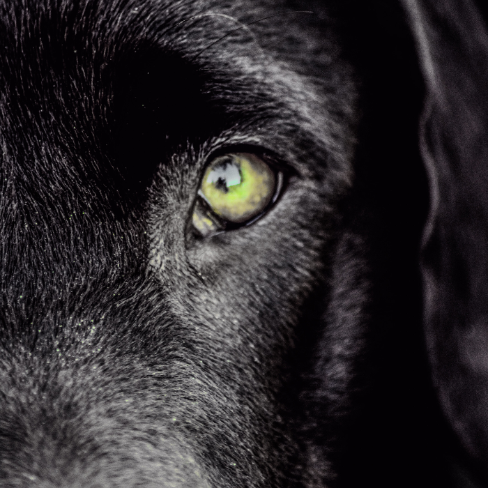 Hundeschule & Blindenführhundschule Dennis Dietz