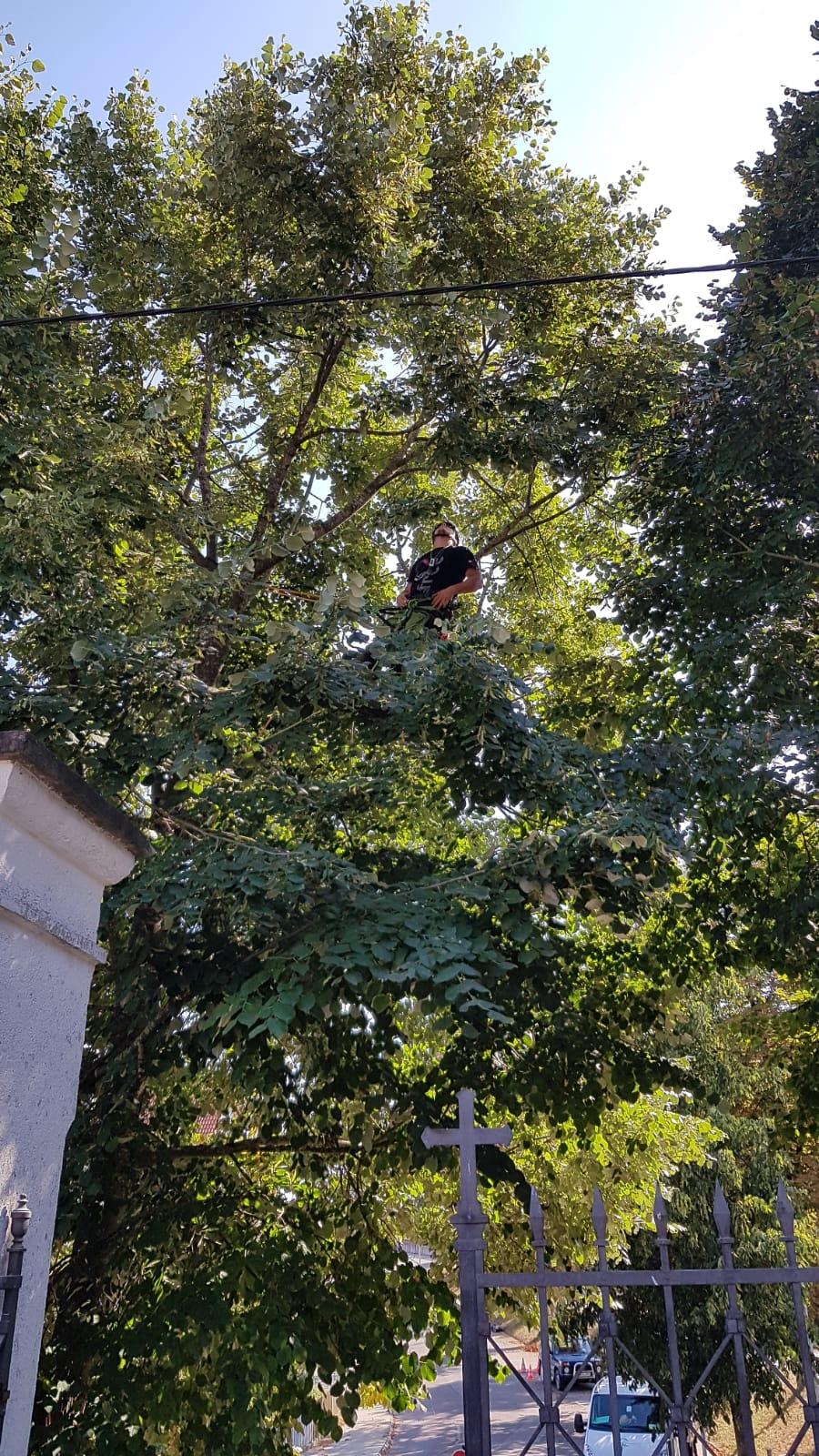"""Fachbetrieb für Baumpflege """"OnTop-treeworker"""""""
