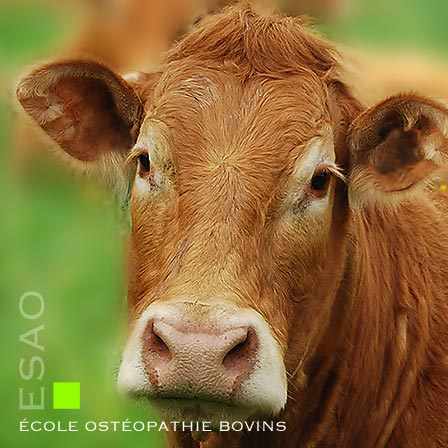 ESAO école supérieure ostéopathie animale