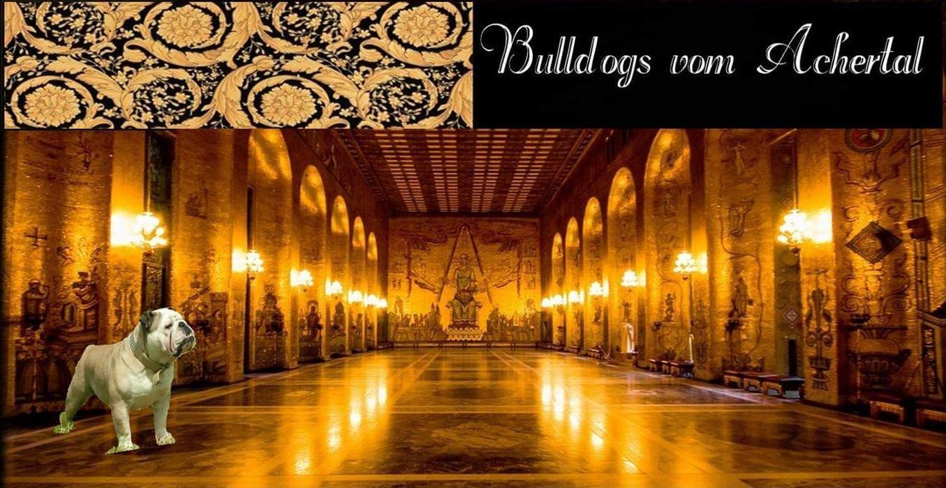 Logo von Bulldogs vom Achertal