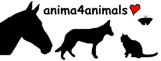 Anima4animals, Institut für Tierkommunikation