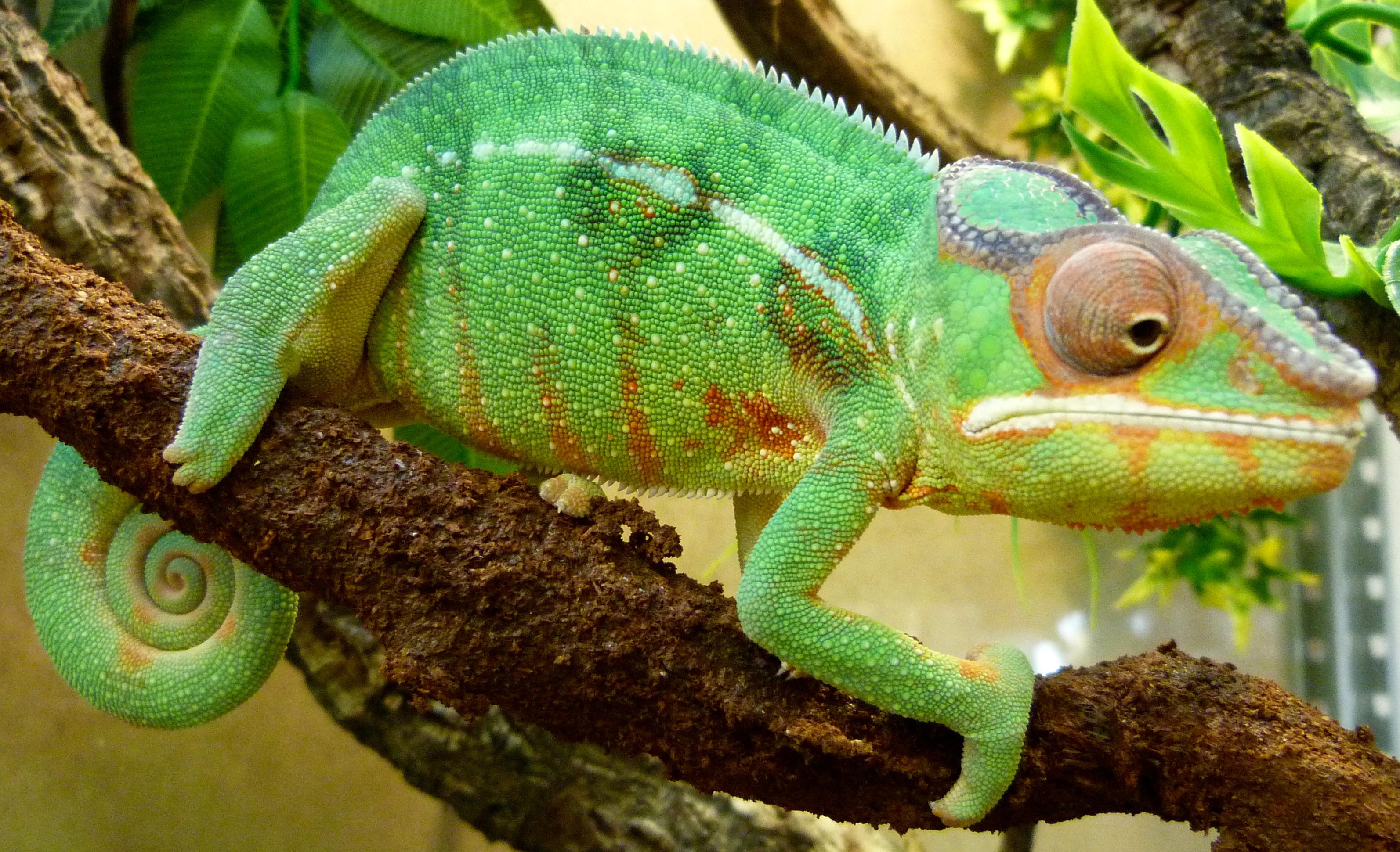 Reptil'Oz