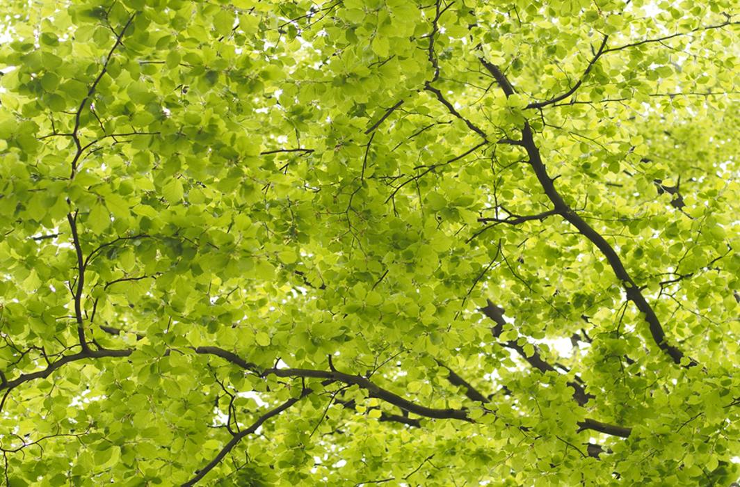 Praxis für Natürliches Heilen Andrea Reuter