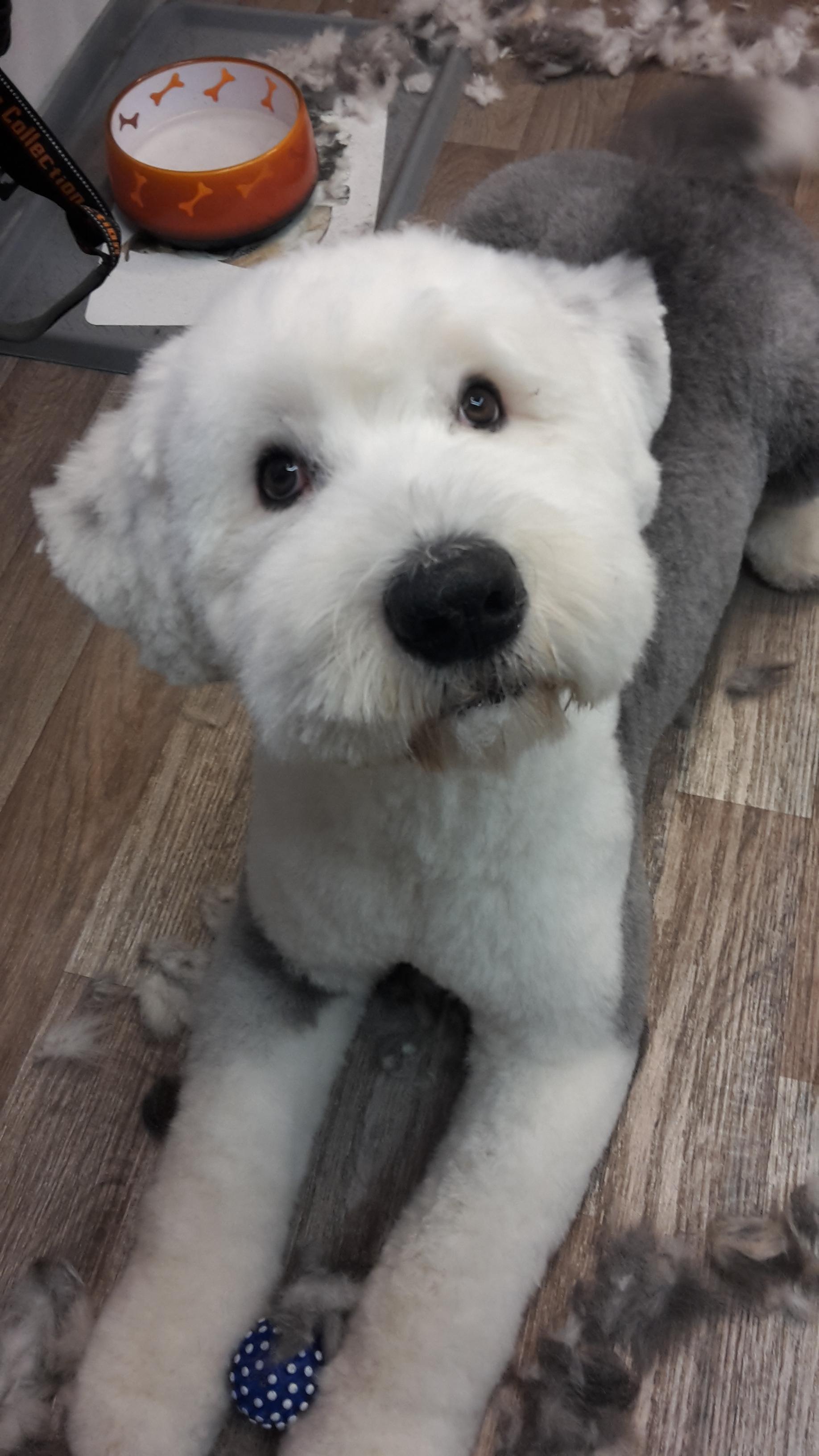 Hundesalon Phelan