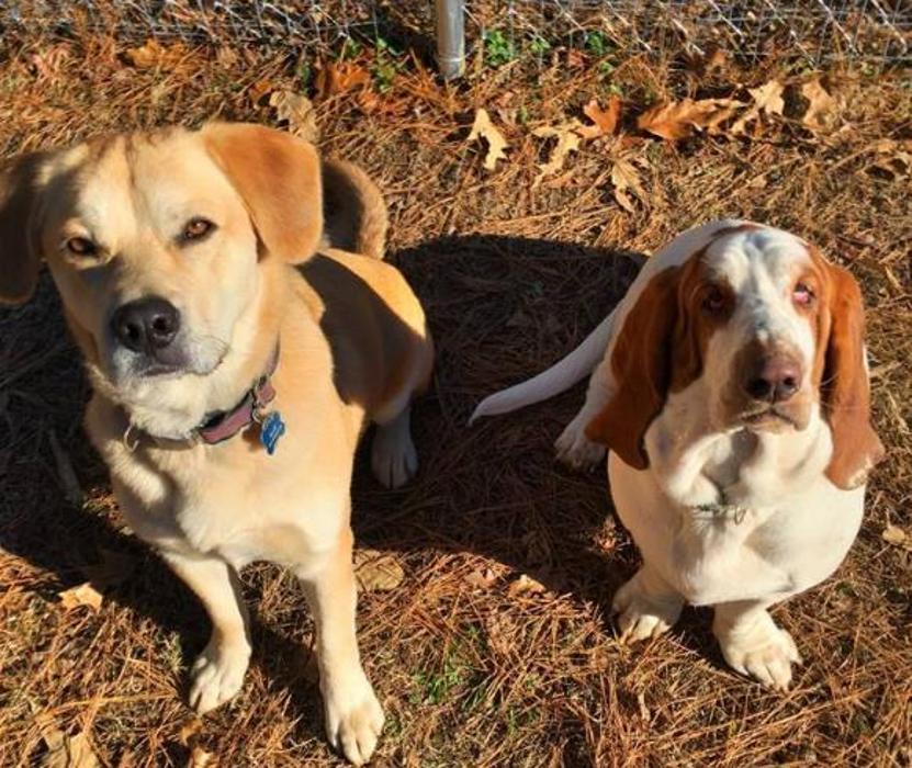 Whole Dog Institute - Durham, NC