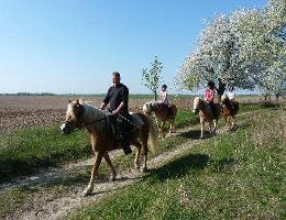 Haflinger- und Ponyfarm Müller