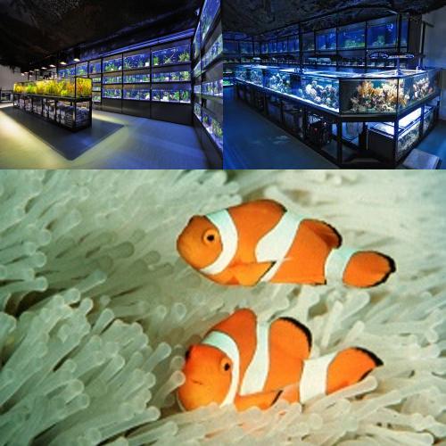 KN-Aquaristik Versandhandel GmbH