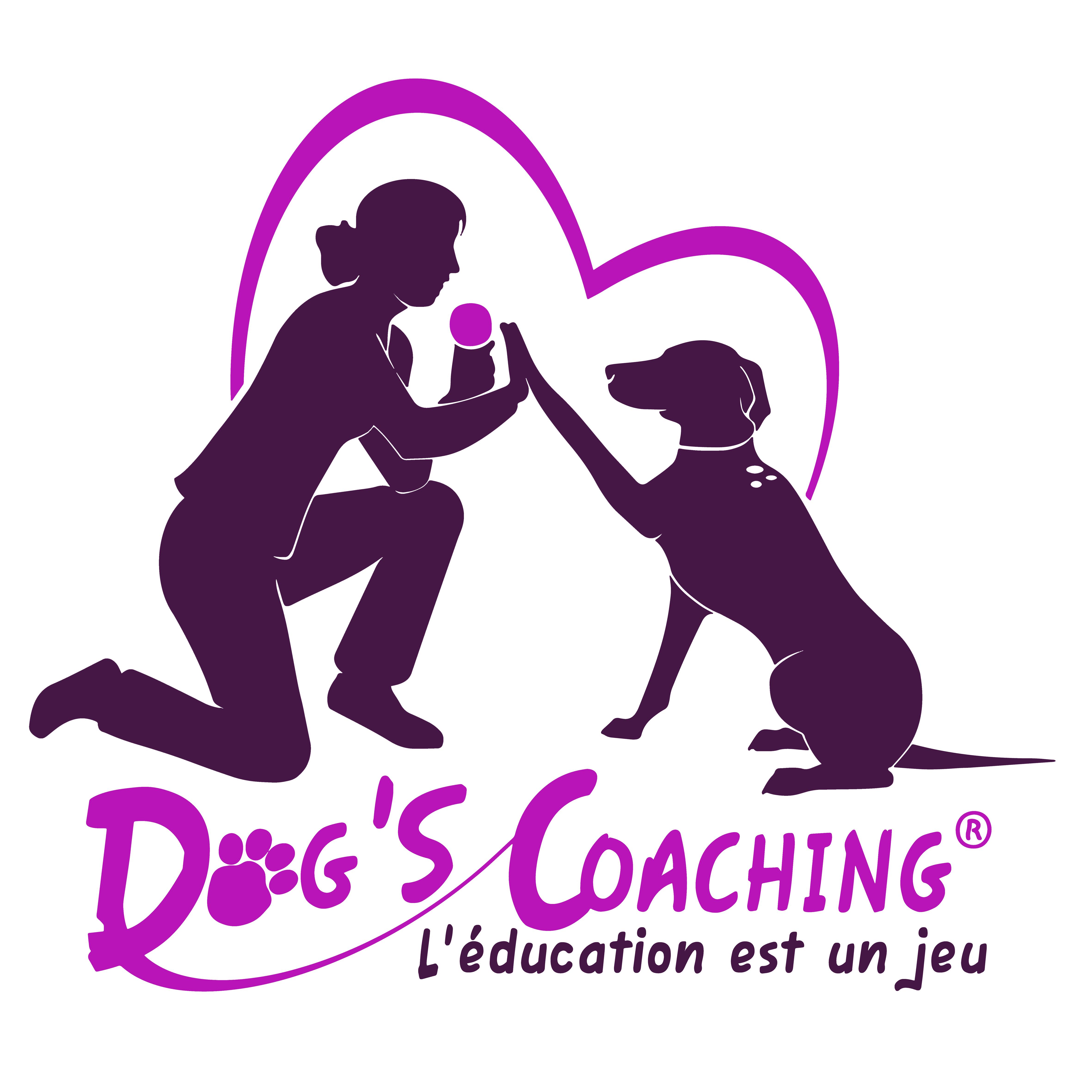 Dog's coaching dressage animal