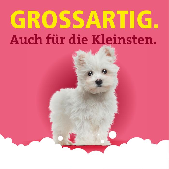 abclocal.alt.text.photo.1 Fellini-Hundesalon Berlin-Pankow abclocal.alt.text.photo.2 Berlin