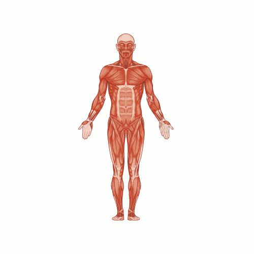 Osteopathy Works Ltd - Crewe, Cheshire CW2 5PR - 01270 886259   ShowMeLocal.com