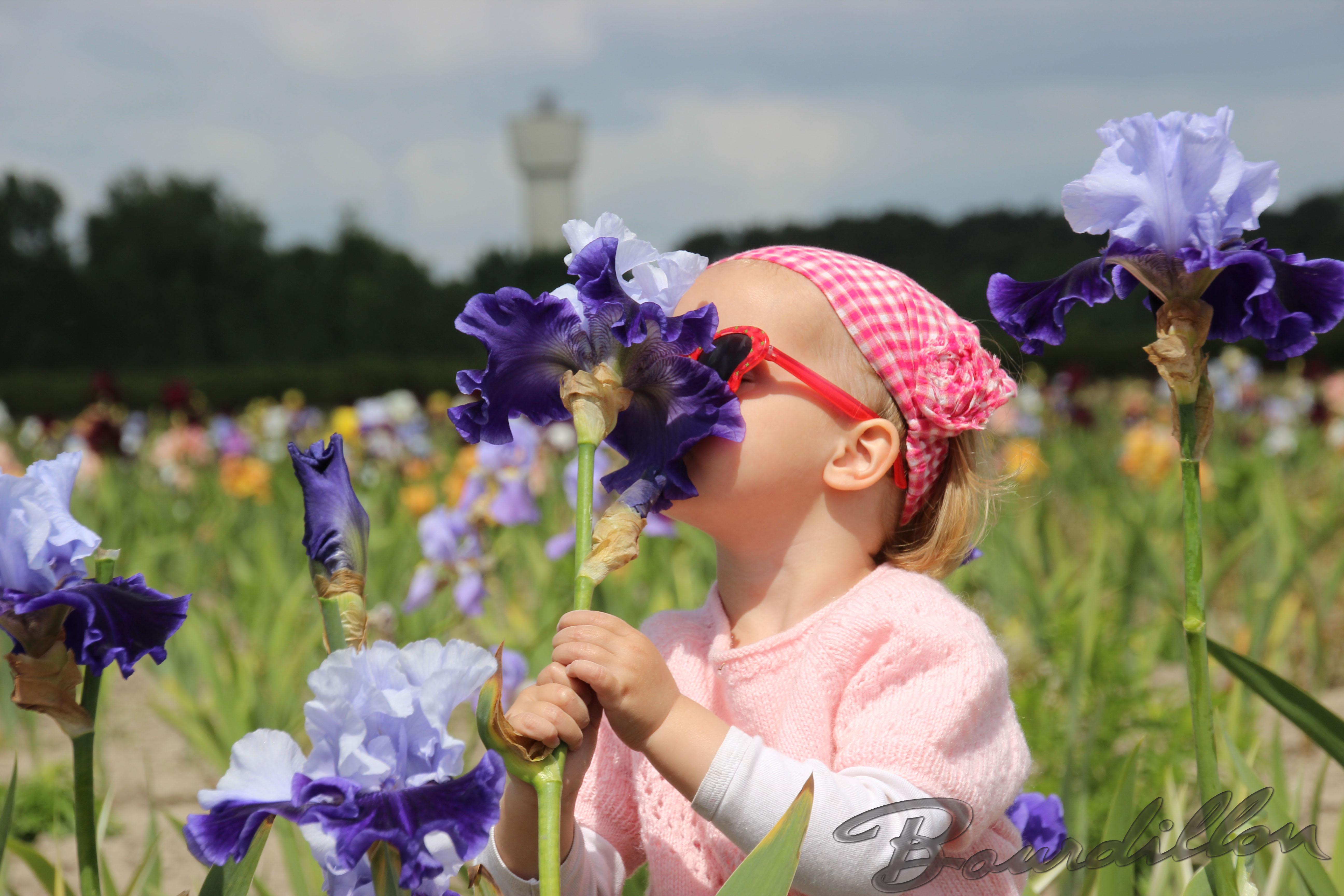 Bourdillon iris