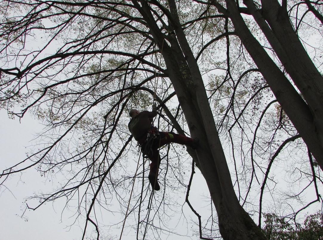 Der Baumwächter Sven Wächter