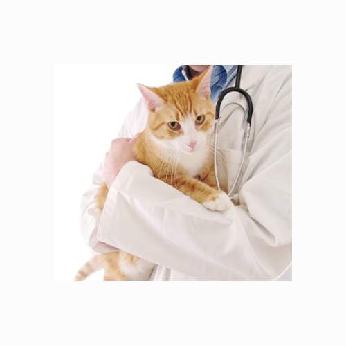 Bell & Partners Vet Surgeon Coventry - Coventry, West Midlands CV2 3AS - 02476 602564 | ShowMeLocal.com