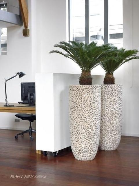 ideal Pflanzen-Service Hydrokulturen - Büropflanzen