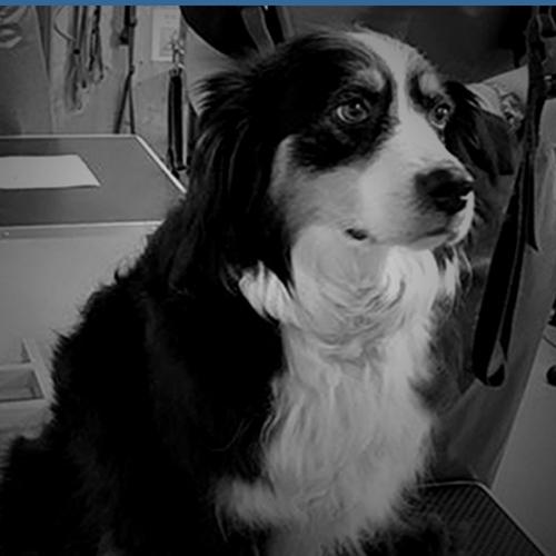 Shaw Dog Grooming - Ottery Saint Mary, Devon EX11 1AB - 01404 758458   ShowMeLocal.com
