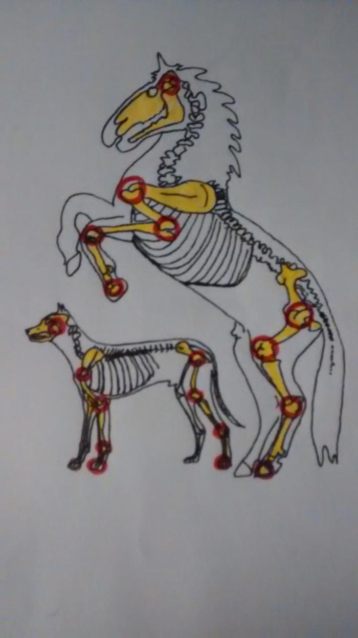 Bild zu Mobile Tierheilpraxis Ninja Herbert-Geng in Xanten
