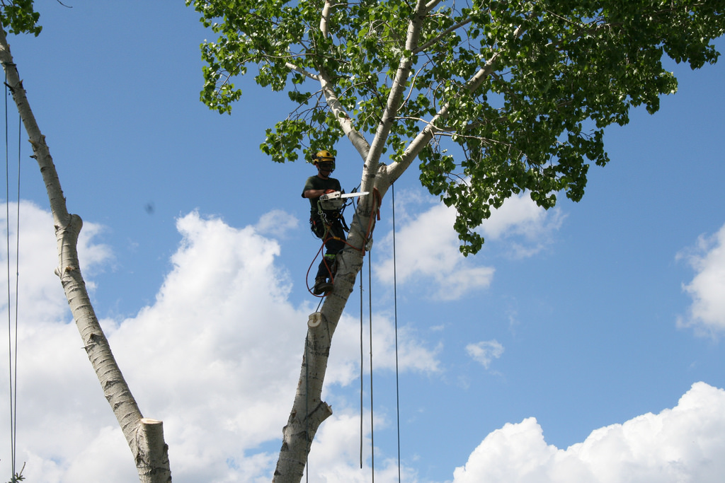 Grinder's Tree Service