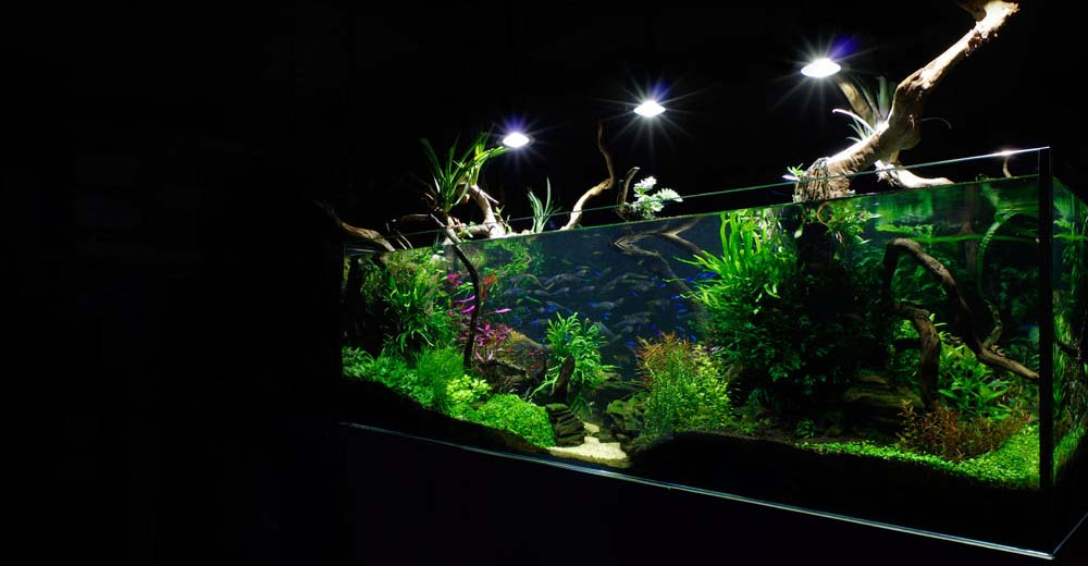 The Aquatic Design Centre - London, London SW12 0PS - 020 7637 2632 | ShowMeLocal.com