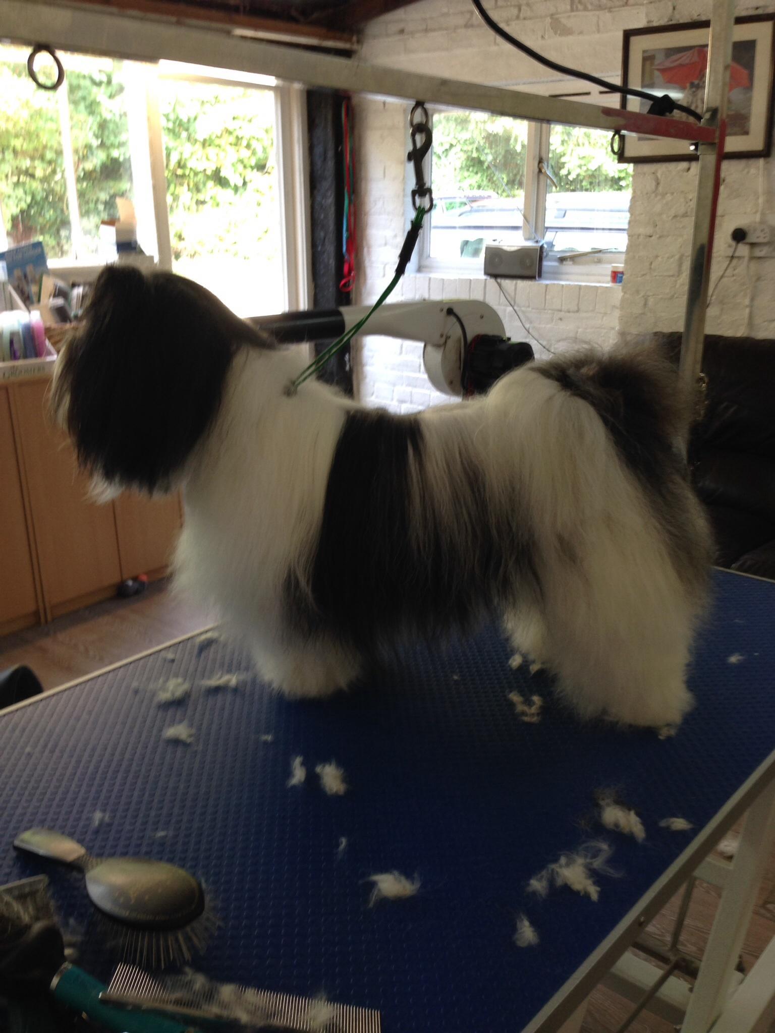 Devizes Dog Grooming By Marianne - MELKSHAM, Wiltshire SN12 6RT - 01380 827235 | ShowMeLocal.com