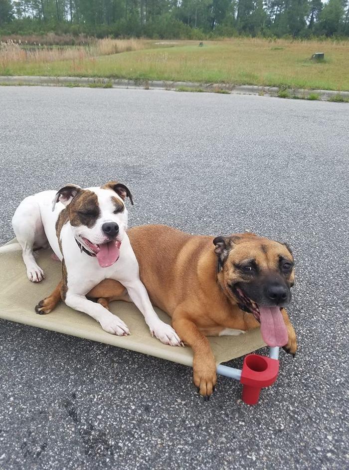 The Wilmington Dog Wizard - Wilmington, NC
