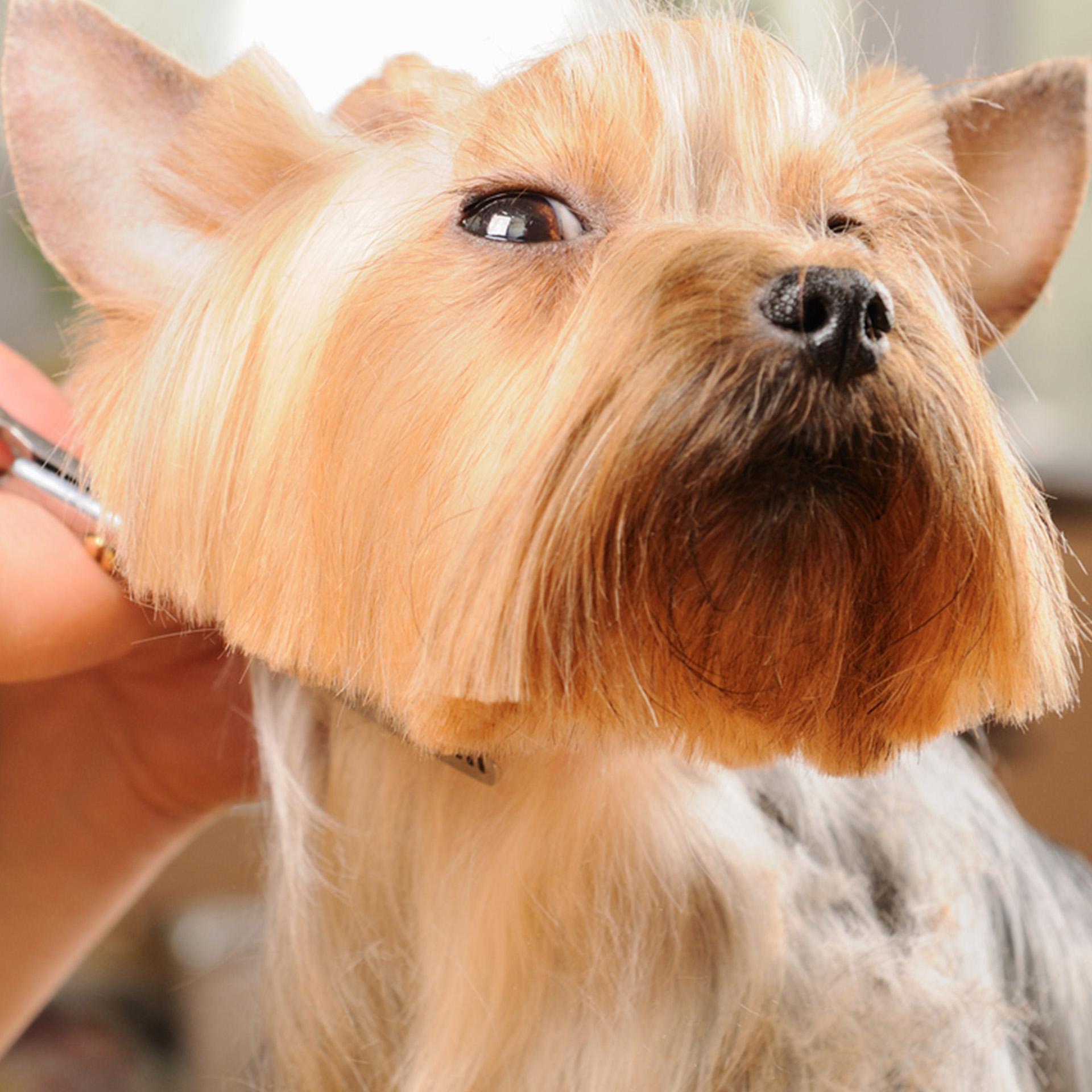 Fai Bello Il Tuo Cucciolo