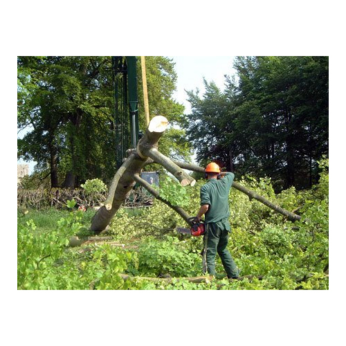 Tree Maintenance Services - Reading, Berkshire RG30 3JL - 07989 440931 | ShowMeLocal.com