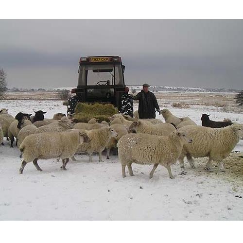 Uplees Farm - Faversham, Kent ME13 0QR - 01795 532133   ShowMeLocal.com