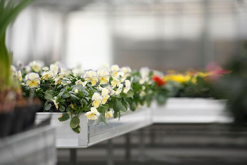 Blumen Nussbaumer GmbH