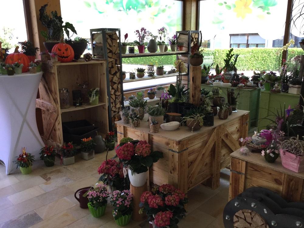 Blumen Catrin - Liebe zur Natur