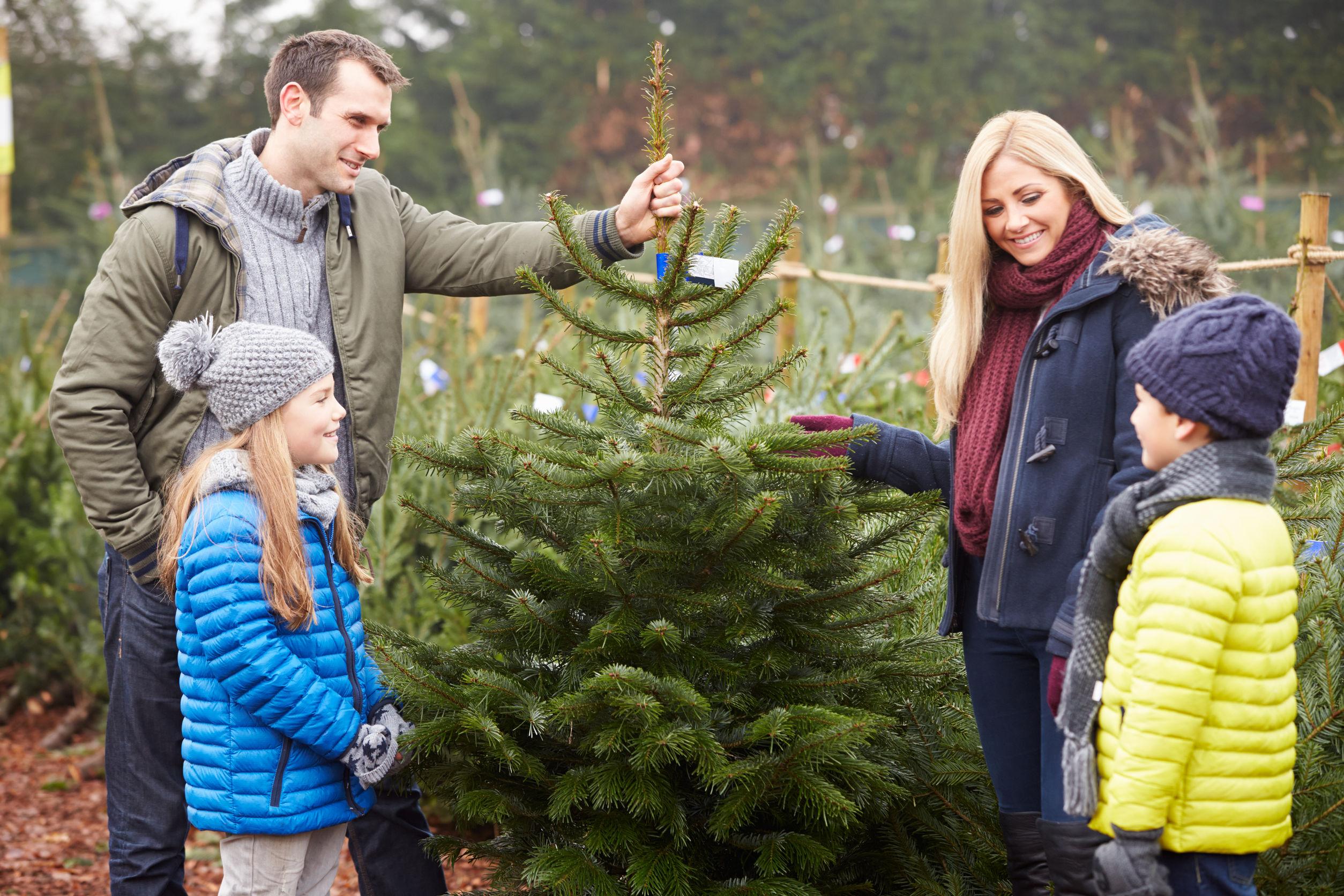 Weihnachtsbaumfreunde.de