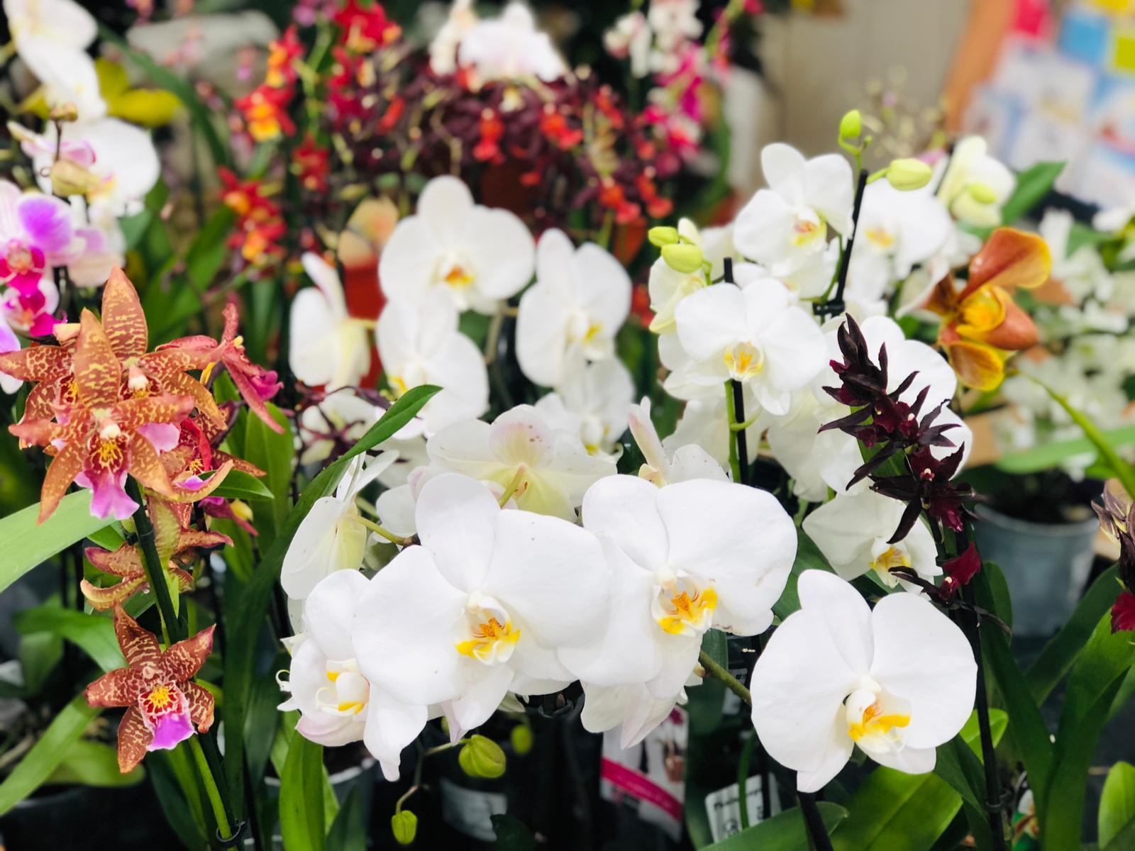 Palmer Gardens - Shaw Trust Garden Centre