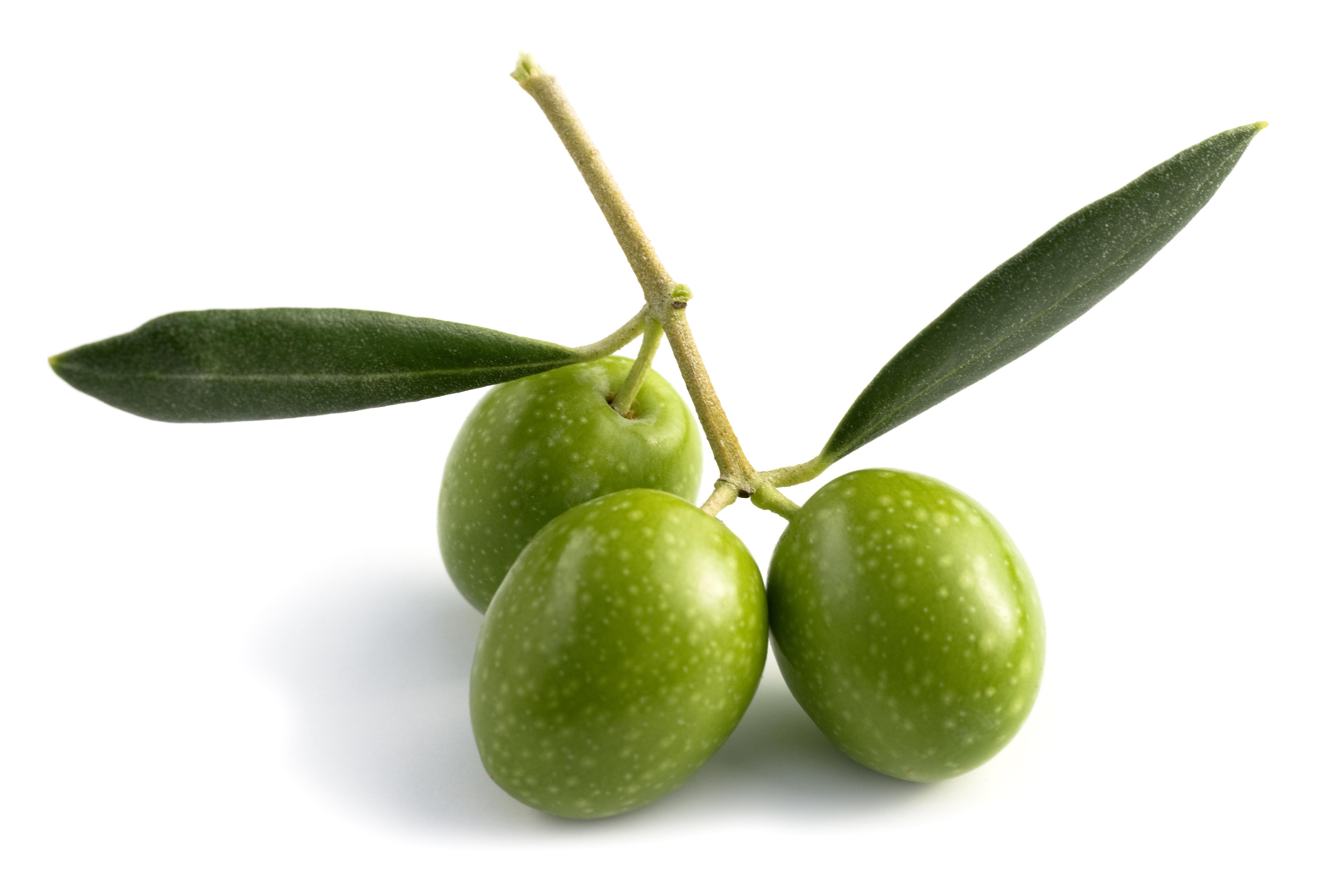 Olive HR